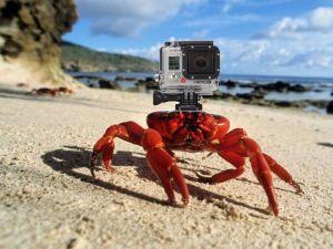 crabe équipé gopro