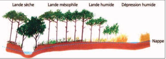 types de Landes